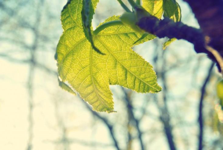 Mindfulness – uważność, a redukcja stresu